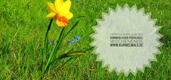 Frühling, #wib, Narzisse, Osterglocke